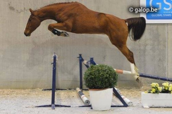 Big Spender Z (Balou du Rouet - Corofino) winner of the first GSA selection free jumping. Video: www.globalstarsauction.com